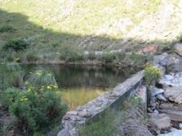 Dam in Noupoort stream dam, Greyton Nature Reserve