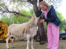 Friendly sheep, Die Mond campsite