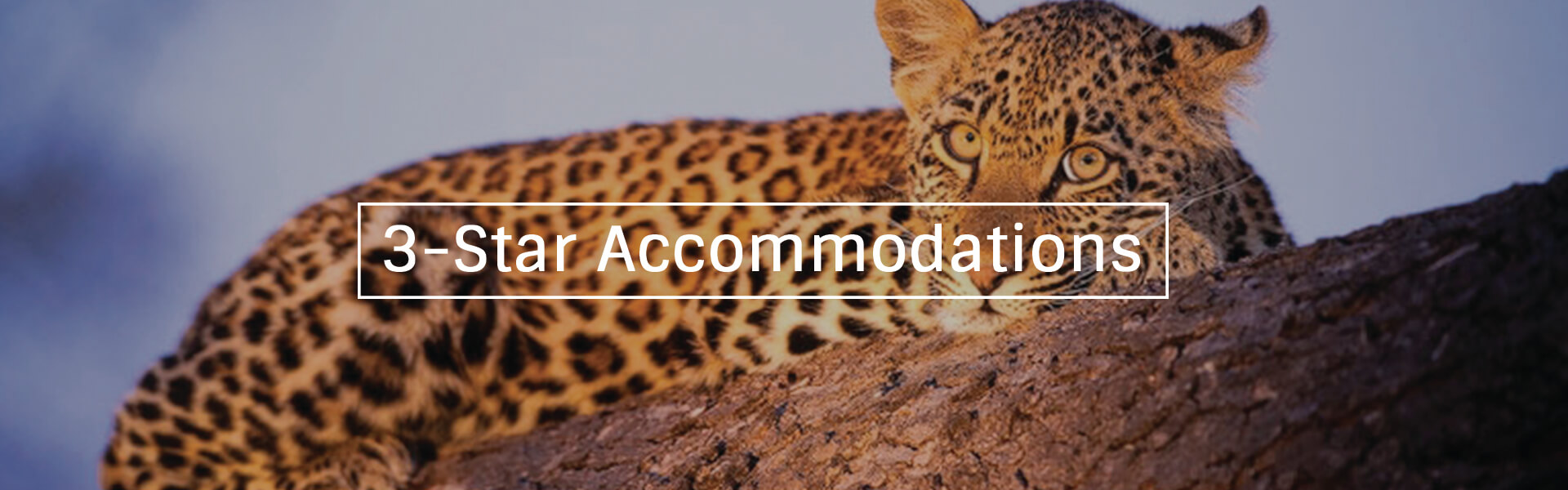 3 Star Accommodation Banner12