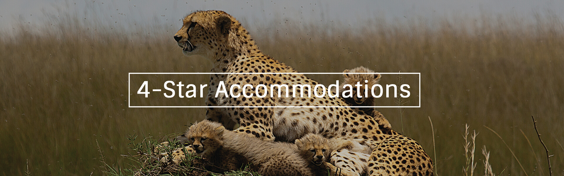 4 Star Accommodation Banner1