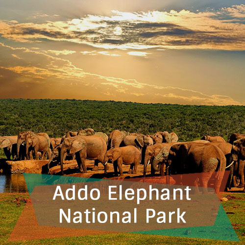 Addo Elephant National Park New Feature Image