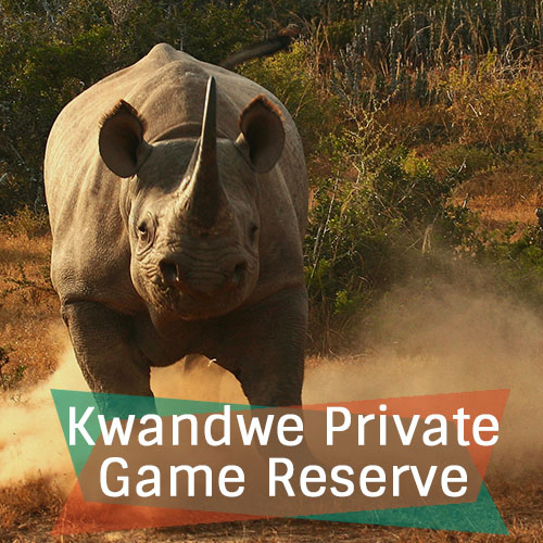 Kwandwe Private Game Reserve New Feature Image