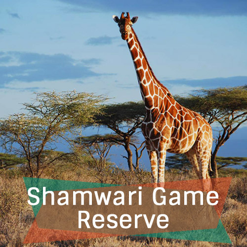 Shamwari Game Reserve Fetured Image 500x500