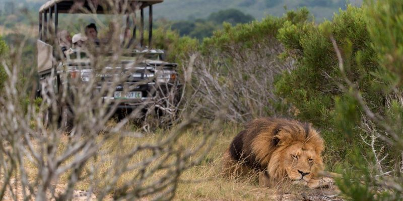 Kwantu Private Game Reserve Game Drives