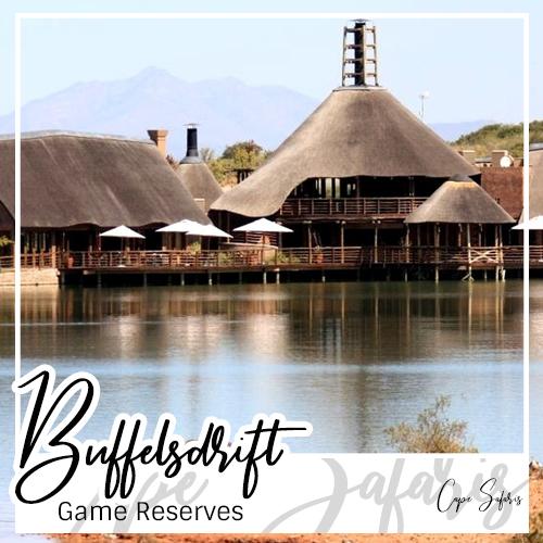 Buffelsdrift Game Reserve Fetured Image 2019