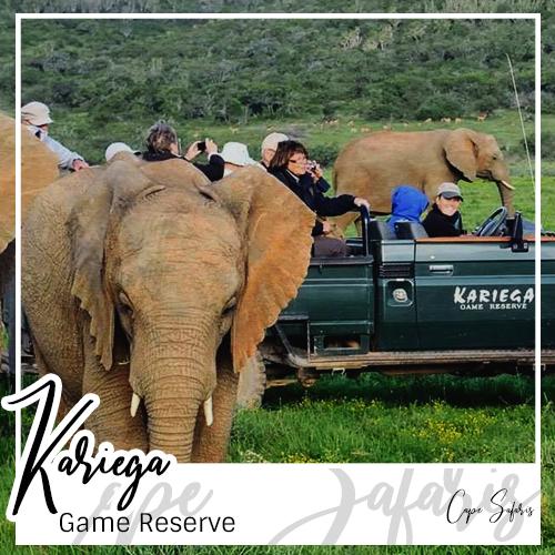 Kariega Game Reserve Fetured Image 2019
