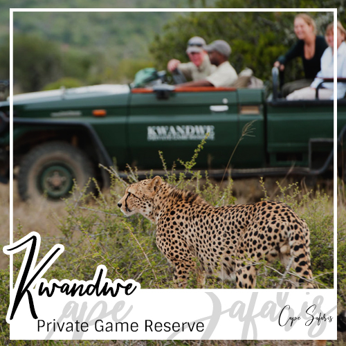 Kwandwe Private Game Reserve Fetured Image 2019