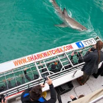 Grootbos Villa Sharks