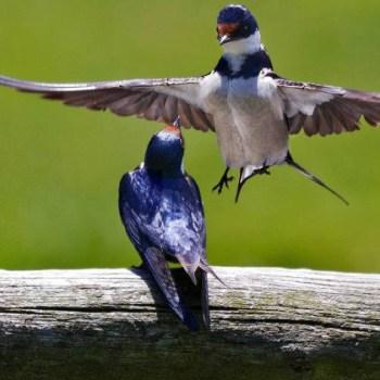 Grootbos Villa Two Birds