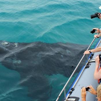 Grootbos Villa Whales