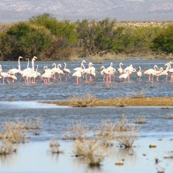 Inverdoorn Game Reserve Flamingos