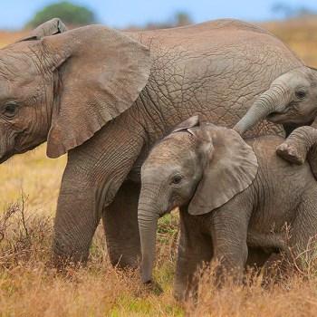 Kariega Homestead Elephants