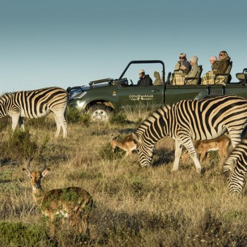 Kwena Lodge Zebra