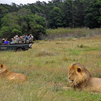 Tented Eco Camp Game Drives