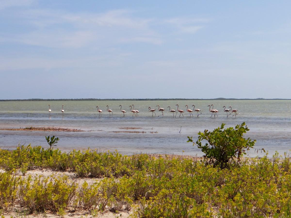 Jaragua National Park flamingoes // Dominican Republic