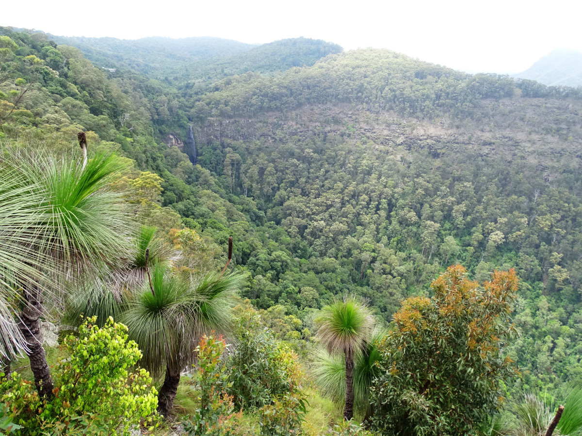 Australia // Lamington National Park.