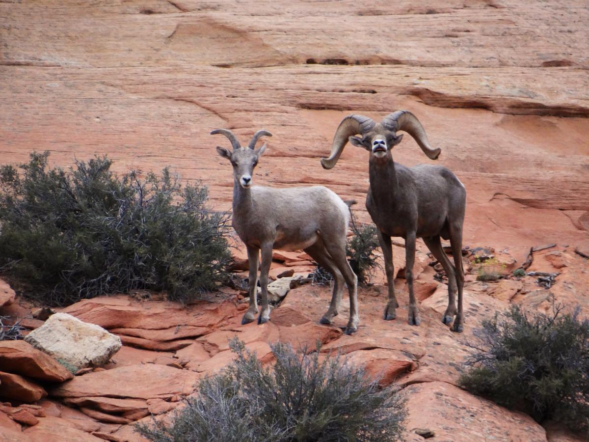 USA Zion National Park Hiking