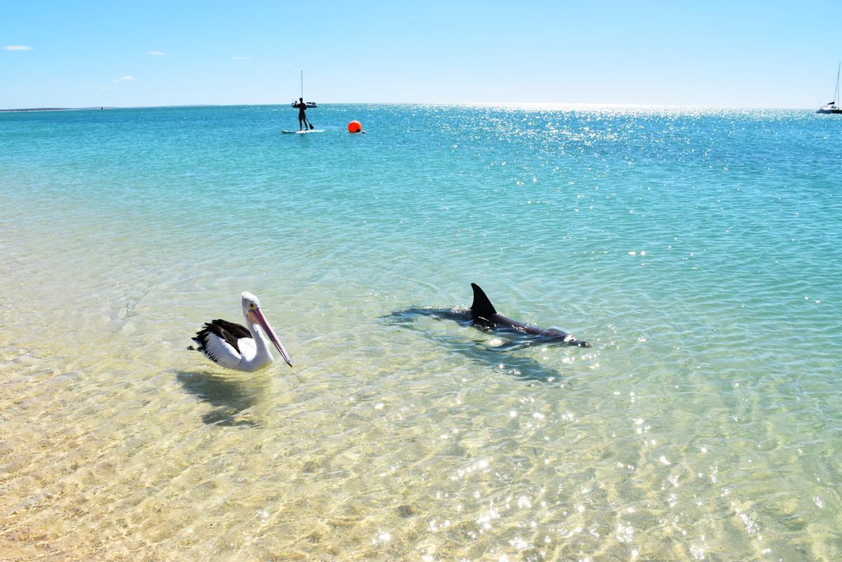 Australia Shark Bay Monkey Mia