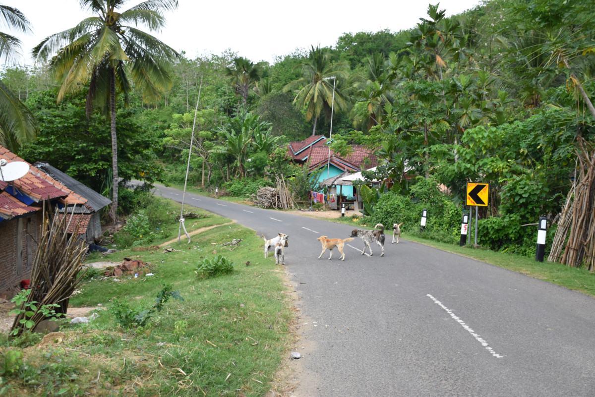 Indonesia Lombok Kuta