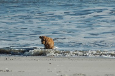 dogdaysofwinter1
