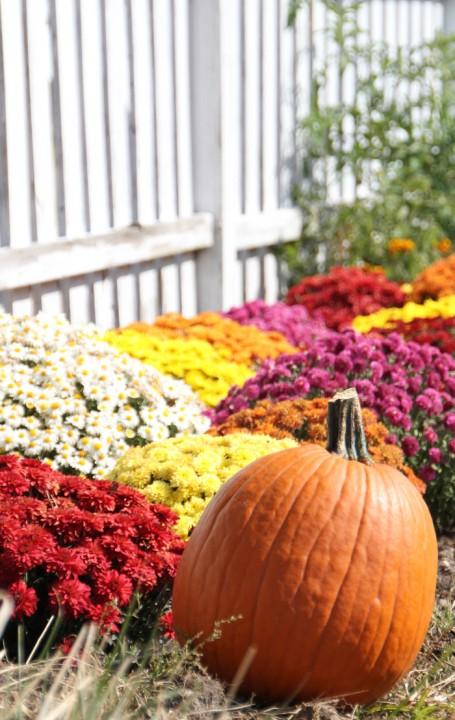 Love Fall Colors