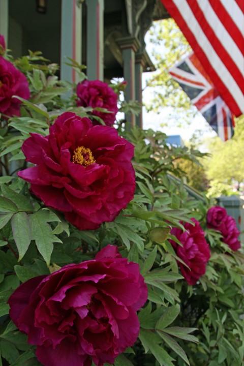 Flag & Flowers