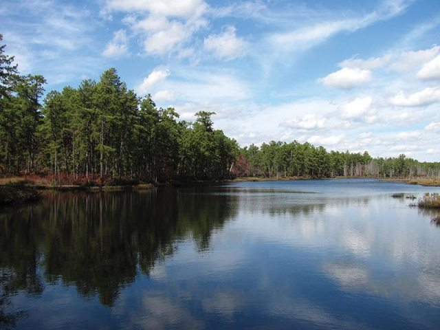 Deep Run in Wharton State Forest. Photograph courtesy of the New Jersey Pinelands Commission.