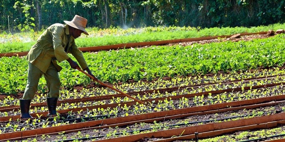 Deva Armoogum : When Permaculture Saved Cuba