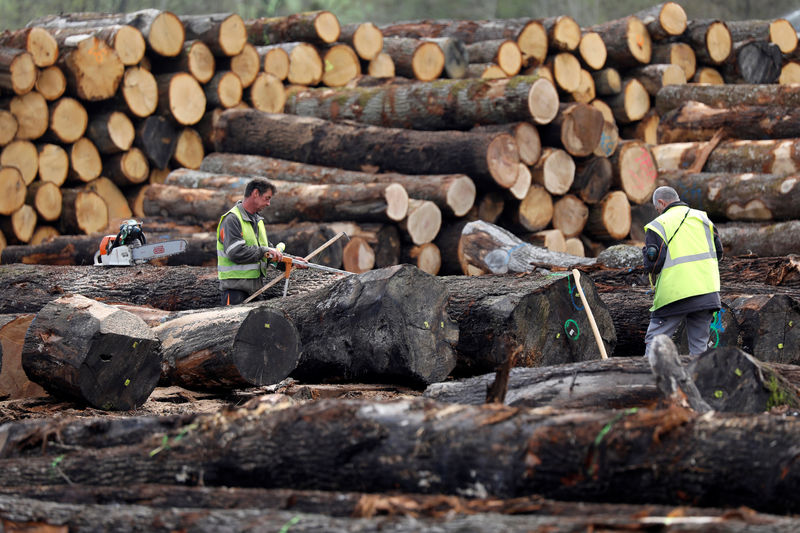 Lumber Frenzy Drives Up Home Prices as Suppliers Can't Keep Up By Bloomberg