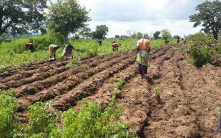 Oikocredit investit 10 millions $ pour des PME agricoles au Nigeria