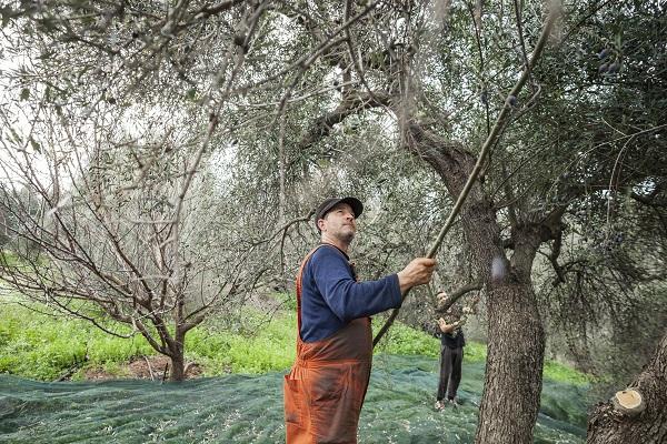 Κορρές: Ο πρωτογενής τομέας και οι Έλληνες καλλιεργητές στο επίκεντρο