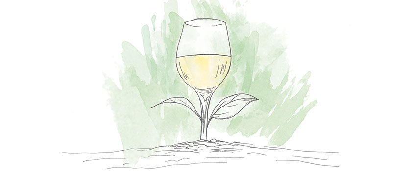 Wine for Spring
