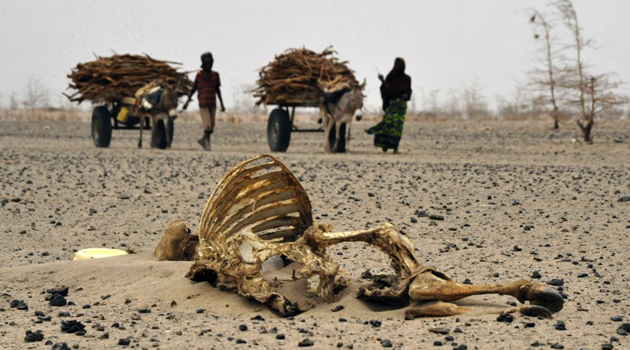 According to the Government, Kilifi is the worst hit by the drought followed by Kwale, Tana River and Taita Taveta counties in the Coastal region/FILE