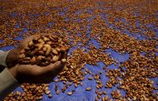 Former Cargill Manager Buys Dutch Cocoa Factory With Partners