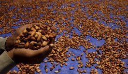 Côte d'Ivoire and Ghana Resilient to Credit Pressure from 10-yr low in Cocoa Prices