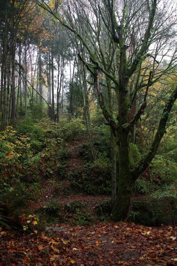 The still-wooded area around Capitol Hill's present-day northeast might be the closest glimpse into the hill's past: Interlaken Park, originally uploaded by e_grosh