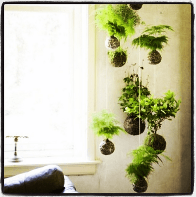 Hanging planters like these could be among the offerings when Niche Outside opens this fall (Image: Niche Outside via Instagram)