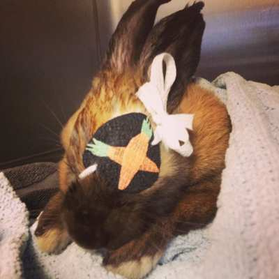 A bunny with an eye patch (Images: Broadway Veterinary Hospital)