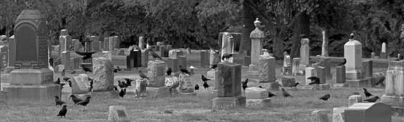 """Cemetery crows"" (Image: Kate Clark via Flickr)"