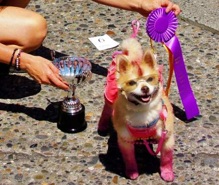 Of course the Pride Festival's doggie drag contest is returning (Images: CHS)