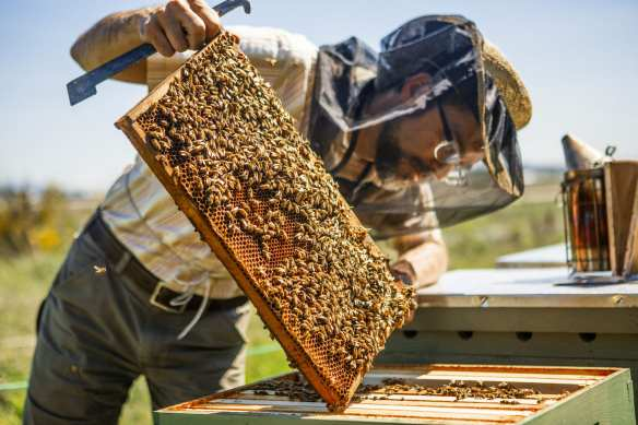 (Image: Urban Bee Co.)