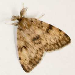 A male (Images: Wikipedia)