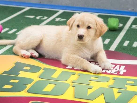 (Image: Puppy Bowl)