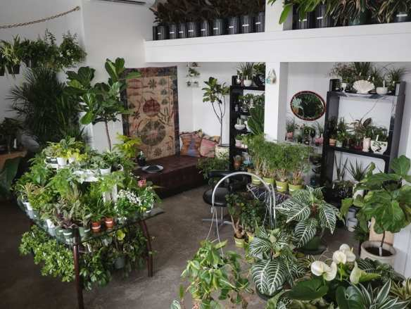 The new Homestead Seattle Plant Shop (Image: Homestead Seattle)