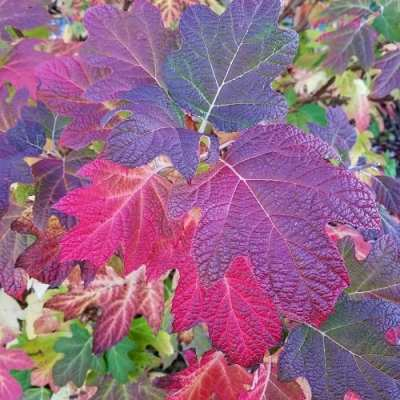 Gardening with the Seasons: Fall @ Center for Urban Horticulture
