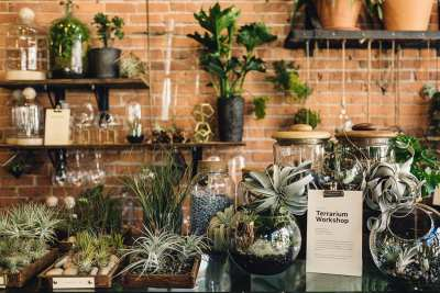 """Greenhouse Sale,"" Glasswing Plant Event @ Glasswing Shop"