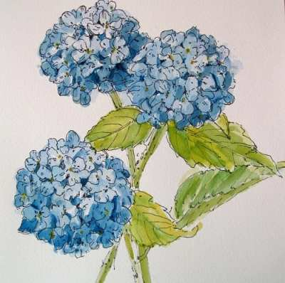 Botanical Sketching in Ink and Watercolor (February) @ Center for Urban Horticulture