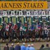 2015 Preakness Stakes Betting Preview | Free Prediction & Odds