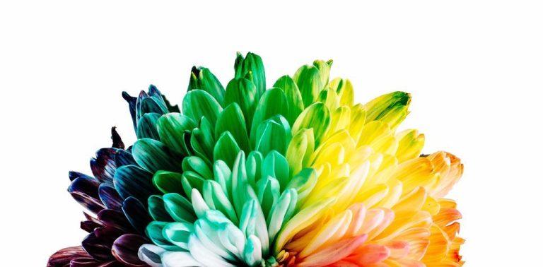Palette de couleur pigments spiruline
