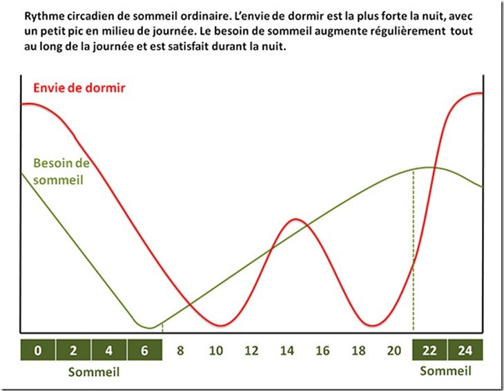 rythme-circadien-consommation-cafe-besoin-sommeil